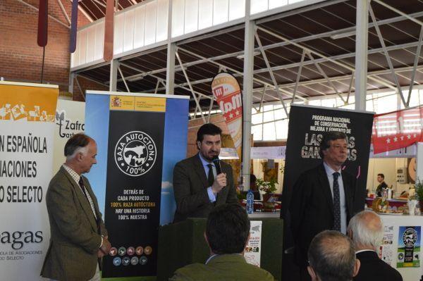 Feria de Primavera de Zafra 2016